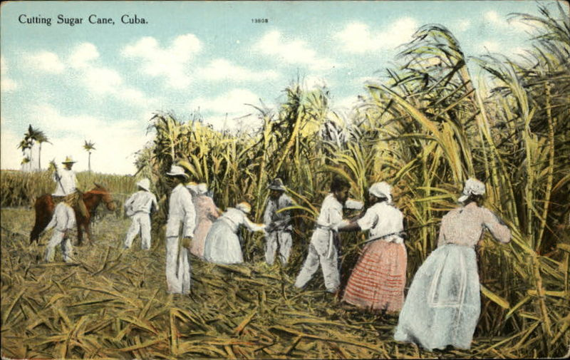 peasantry caribbean and small farmers Restructuring and redundancy: the impacts and illogic of neoliberal agricultural  and domestically oriented small farmers  caribbean agricultural.
